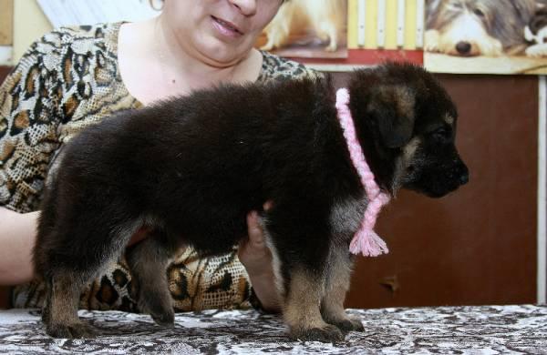 http://fauna42.ucoz.ru/_fr/4/s1565052.jpg