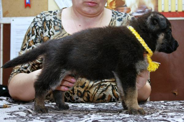 http://fauna42.ucoz.ru/_fr/4/s5171688.jpg