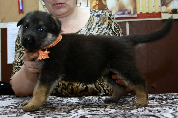 http://fauna42.ucoz.ru/_fr/4/s6969678.jpg