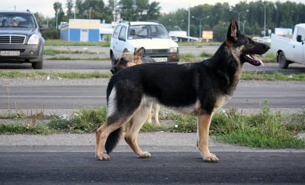http://fauna42.ucoz.ru/_fr/4/s7313680.jpg