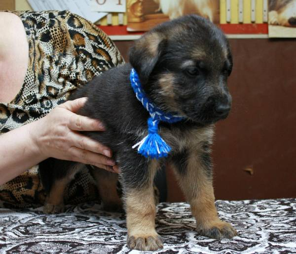 http://fauna42.ucoz.ru/_fr/4/s7837273.jpg