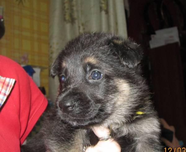 http://fauna42.ucoz.ru/_fr/4/s7913456.jpg