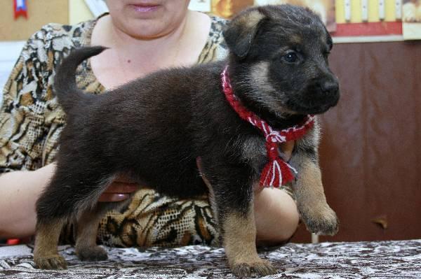 http://fauna42.ucoz.ru/_fr/4/s8980310.jpg
